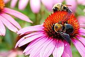 Bumble Bee Teamwork