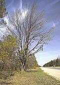 Shoe Tree,Michigan