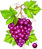 Grape cluster with green leaves and water drops.