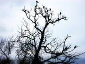 Birds On Tree 2