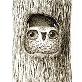 Cute Baby Owl Sitting In the Tree Hollow