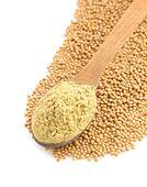 mustard powder in spoon
