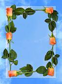 Rose frame 5a