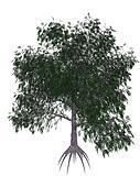 Pecan tree - 3D render