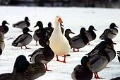 Do you STAND OUT from the crowd?