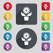 Flowers in pot icon sign. A set of 12 colored buttons and a long shadow