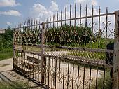 Hurricane Katrina - Wrought Iron Fence
