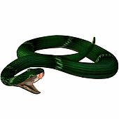 Snake-Temple Viper