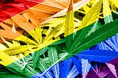 Rainbow Flag on cannabis background. Drug policy. Legalization of marijuana