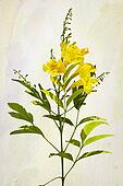 Yellow Campsis radicans flowers