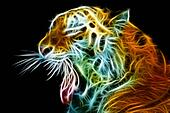 Tiger head. Abstract with black background.