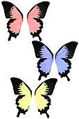 Isolated Butterfly Fantasy Wings