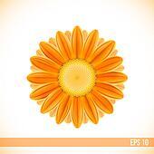 vector orange gerbera flower