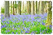 Watercolor painting of bluebell flowers in the woods