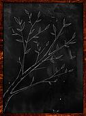 Branch Plant Sketch on Blakboard