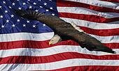Bald Eagle wavy American Flag