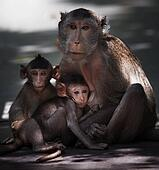 monkey brother and milk from mother breast