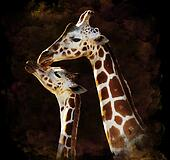 Watercolor Image Of Giraffes
