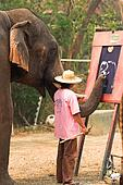 Asian elephant painting o