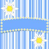 Edelweiss flowers on light blue stripes with a large copy space