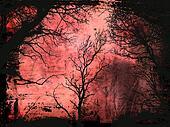 Grunge trees