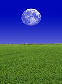 Moon & Sky & Grass