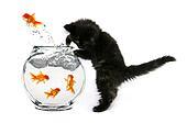Mischeivious Kitten