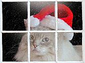 Ragdoll Christmas cat