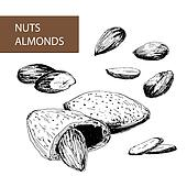 Nuts. Almonds