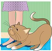Cat Stretchig Shoes