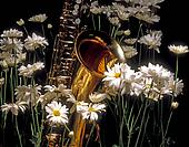 Butterfly and Sax in the Daisy Garden