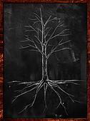 Tree Sketch no leaves root
