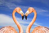Pink flamingo like heart