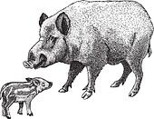 engraving boar and piglet