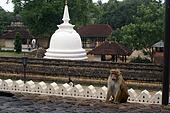 Buddhist stupa and m