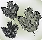 Decorative flower tulip, hand-drawing. Vector illustration.