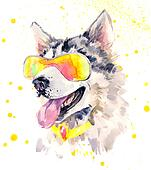 Watercolor siberian husky dog in cool sun glasses