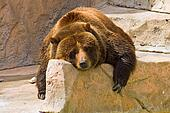 Lazy Day at the Zoo
