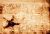 Grunge Background With Starfish