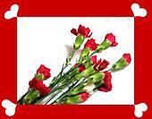 Carnation  Valentine1