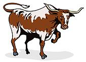 Texas long horn bull