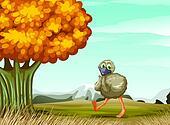 An ostrich near the big tree