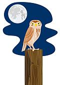 Owl perched on a post wit