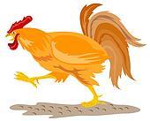 Cockerel ready to attack