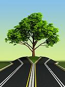 tree in the middle of road