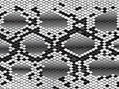 Snake skin in black and white