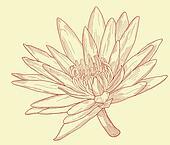 Lily sketch