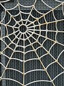 Silvery Web