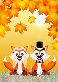 red fox couple