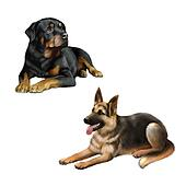 german shepard dog and Rottweiler laying down isolated on white background